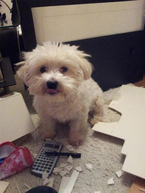 My dog Simba wants to say hi!